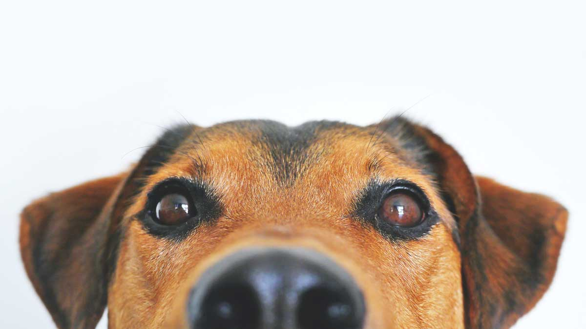 Close up of a dogs face.
